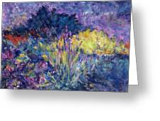 Burst Of Color-last Night In Monets Gardens Greeting Card