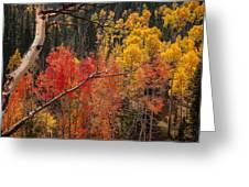 Burst Of Colorado Autumn Color Greeting Card