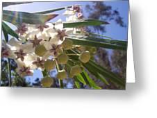 Burst Of Flowers Greeting Card