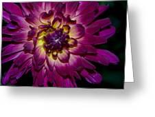 Burst Of Purple Greeting Card