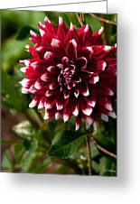 Burst Of Red Greeting Card