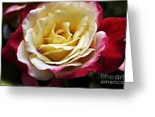 Burst Of Rose Greeting Card
