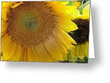 Burst Of Sunshine Greeting Card
