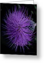 Burst Of Violet Greeting Card