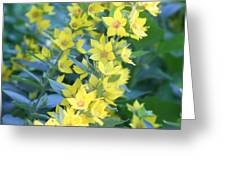 Burst Of Yellow Greeting Card