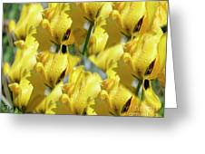 Burst Of Yellow Greeting Card