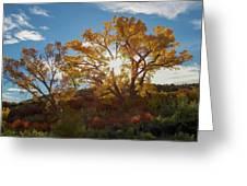 Burst Through The Trees Greeting Card