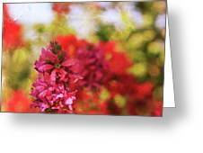 Bursts Of Color Greeting Card