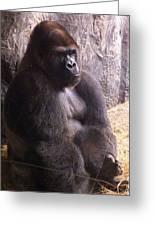 Busch Gorilla Greeting Card