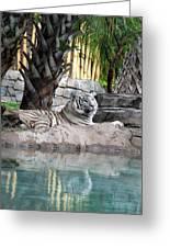 Busch Tiger Greeting Card