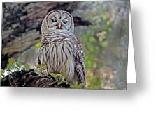Buschman Park Owl Greeting Card