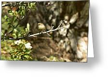 Bushtit On Branch In The Sun Greeting Card