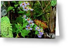 Bushy Aster In Sumac Grove Greeting Card