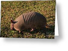 Busy Armadillo Greeting Card