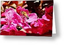 Busy As A Bee 031015 Greeting Card