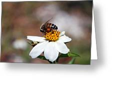 Busy Bee 3 Greeting Card
