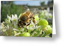 Busy Bee 5 Greeting Card