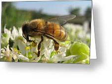 Busy Bee 6 Greeting Card