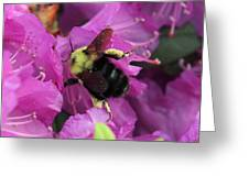 Busy Bee Collecting Pollen On Rhododendron  Greeting Card