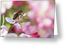 Busy Bee On A Crabapple Tree Greeting Card