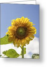 Busy Bee On A Sunflower Greeting Card