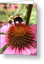 Busy Coneflower Greeting Card