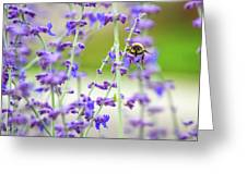 Busy In Lavender 3 Greeting Card