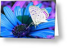 Busy Little Butterfly Greeting Card