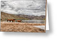 Butcher Jones Horses Greeting Card