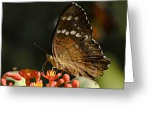 Butherfly Greeting Card