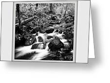 Butte Creek Greeting Card