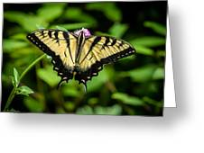 Butter Fly Greeting Card