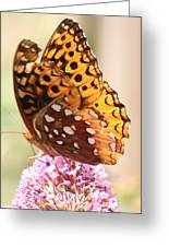 Butter Fly Thrown Looking Left Greeting Card