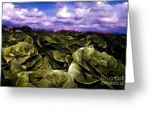 Butter Lettuce In Yuma Greeting Card
