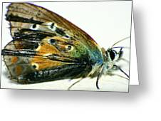 Butter-moth Greeting Card