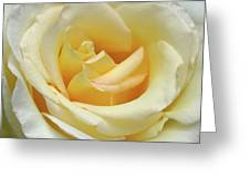 Butter Rose Greeting Card