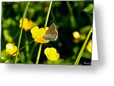 Buttercup Butterfly Greeting Card