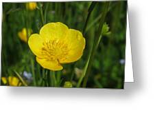 Buttercup Flower Greeting Card