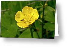 Buttercup Hospitality Greeting Card