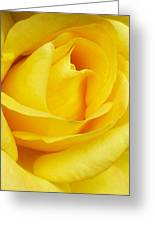 Buttercup Rose Greeting Card