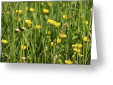 Buttercups And Green Grass At Moore State Park Greeting Card