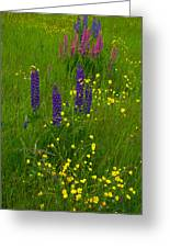 Buttercups And Lupines Greeting Card