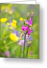 Buttercups And Shooting Star 1 Greeting Card