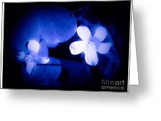 Buttercups In White Blue And Black Greeting Card