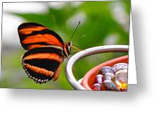 Butterflies Are Blooming Greeting Card