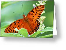 Butterflies Are Free Greeting Card