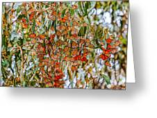 Butterflies In The Grove  Greeting Card