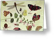 Butterflies, Insects And Flowers Greeting Card