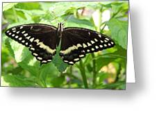 Butterflies Live - 8 Greeting Card