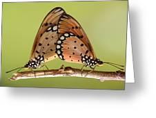 Butterflies Mating Greeting Card